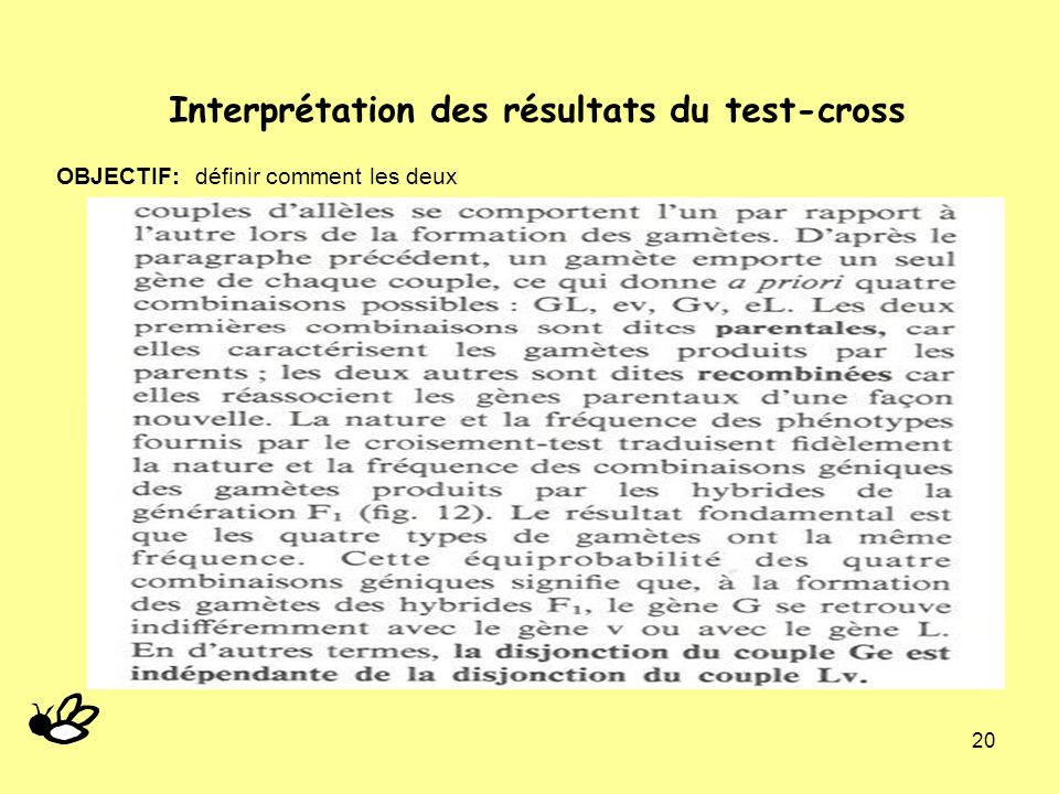 Interprétation des résultats du test-cross