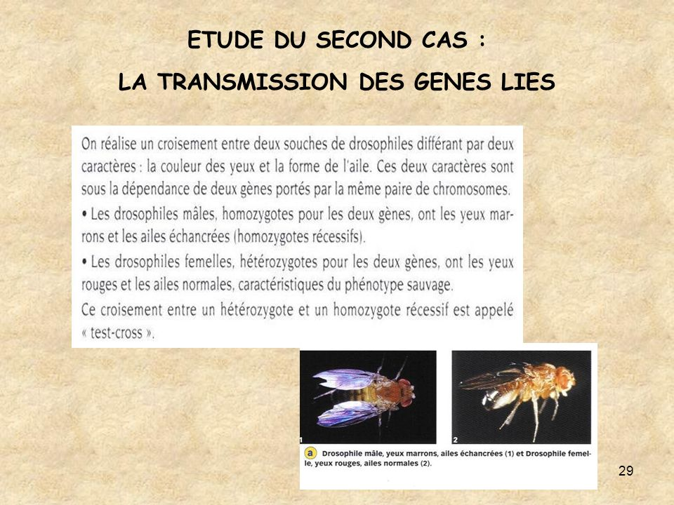 ETUDE DU SECOND CAS : LA TRANSMISSION DES GENES LIES
