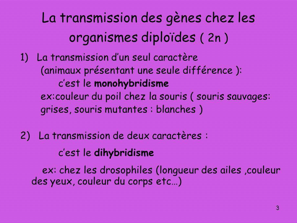 La transmission des gènes chez les organismes diploïdes ( 2n )