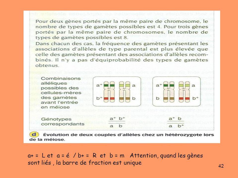 a+ = L et a = é / b+ = R et b = m Attention, quand les gènes sont liés , la barre de fraction est unique