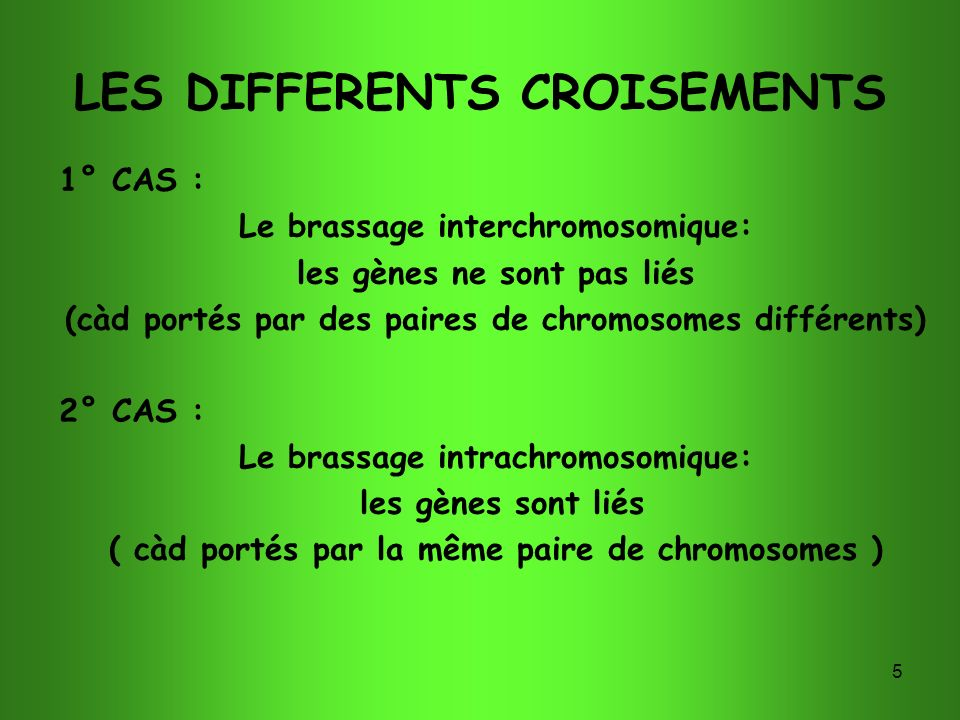 LES DIFFERENTS CROISEMENTS