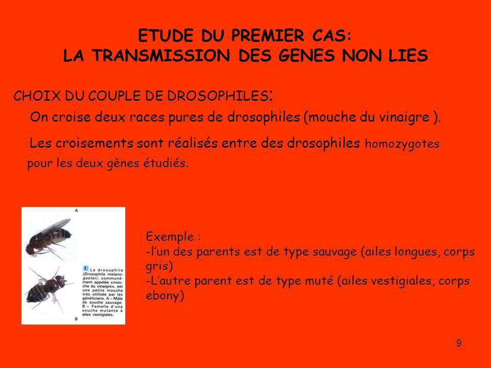 ETUDE DU PREMIER CAS: LA TRANSMISSION DES GENES NON LIES
