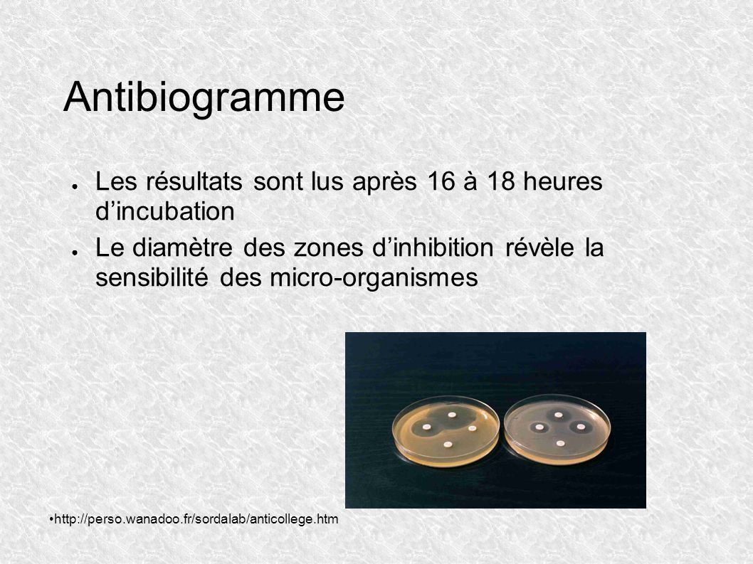 Antibiogramme Les résultats sont lus après 16 à 18 heures d'incubation