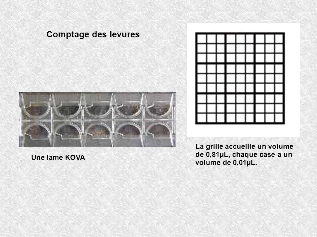 Comptage des levures La grille accueille un volume de 0,81µL, chaque case a un volume de 0,01µL.