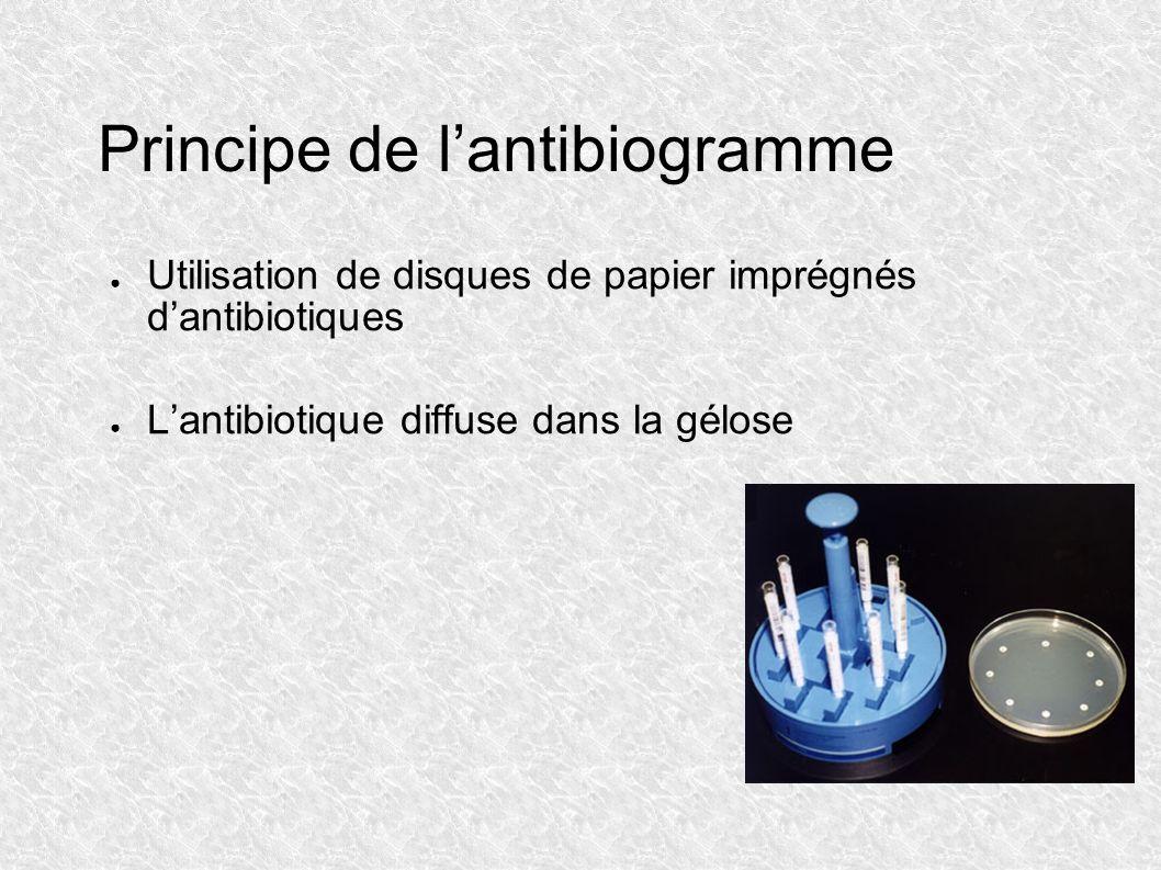 Principe de l'antibiogramme