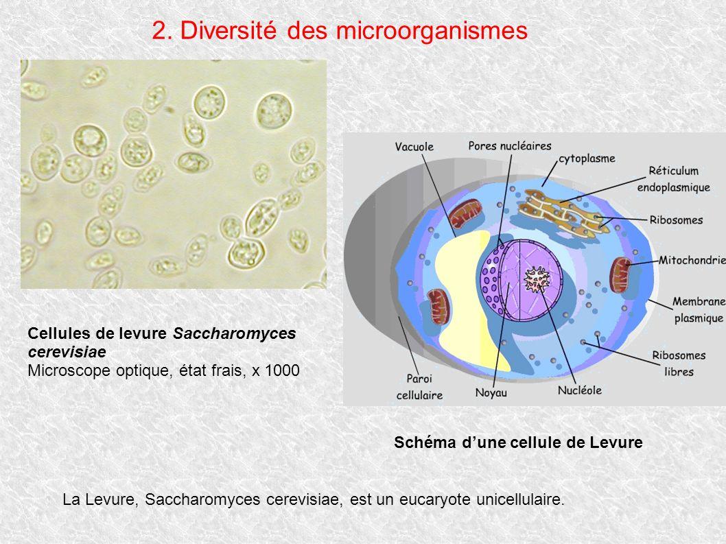2. Diversité des microorganismes