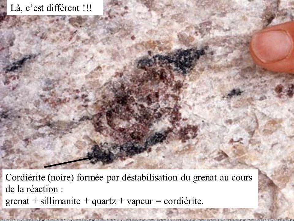Là, c'est différent !!! Cordiérite (noire) formée par déstabilisation du grenat au cours de la réaction :