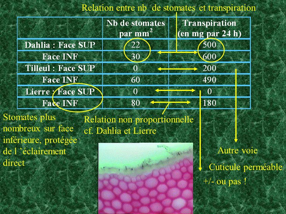 Relation entre nb de stomates et transpiration