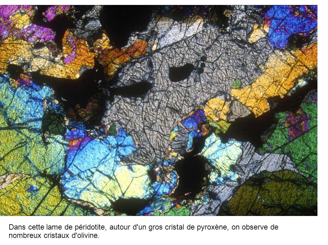 Dans cette lame de péridotite, autour d un gros cristal de pyroxène, on observe de nombreux cristaux d olivine.