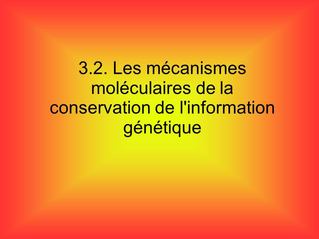 3.2. Les mécanismes moléculaires de la conservation de l information génétique