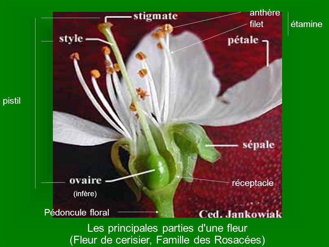 Les principales parties d une fleur