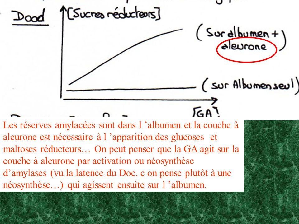 Les réserves amylacées sont dans l 'albumen et la couche à aleurone est nécessaire à l 'apparition des glucoses et maltoses réducteurs… On peut penser que la GA agit sur la couche à aleurone par activation ou néosynthèse d'amylases (vu la latence du Doc.