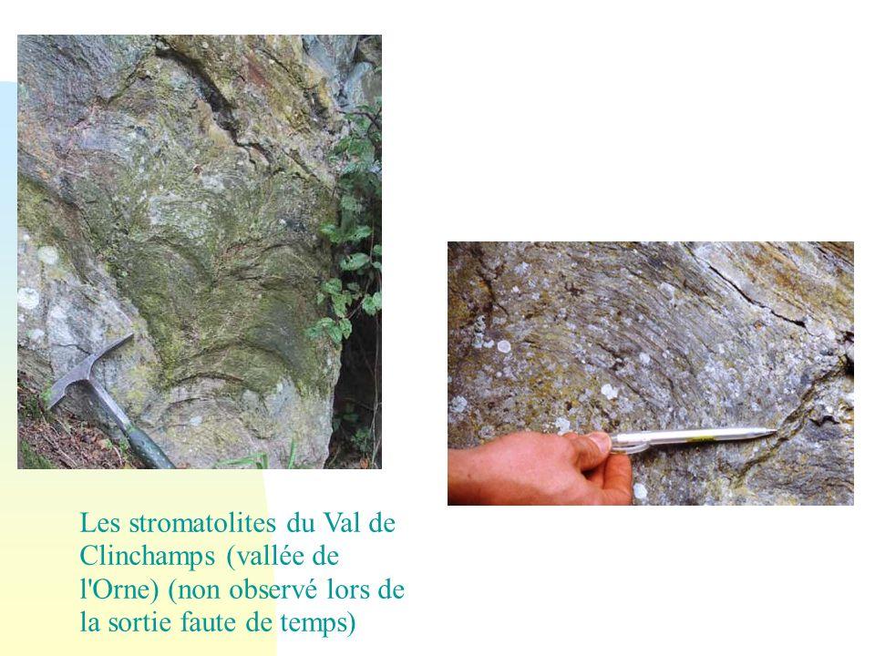 29/05/08 Les stromatolites du Val de Clinchamps (vallée de l Orne) (non observé lors de la sortie faute de temps)