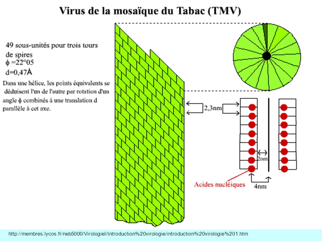 http://membres.lycos.fr/neb5000/VirologieI/Introduction%20virologie/introduction%20virologie%201.htm