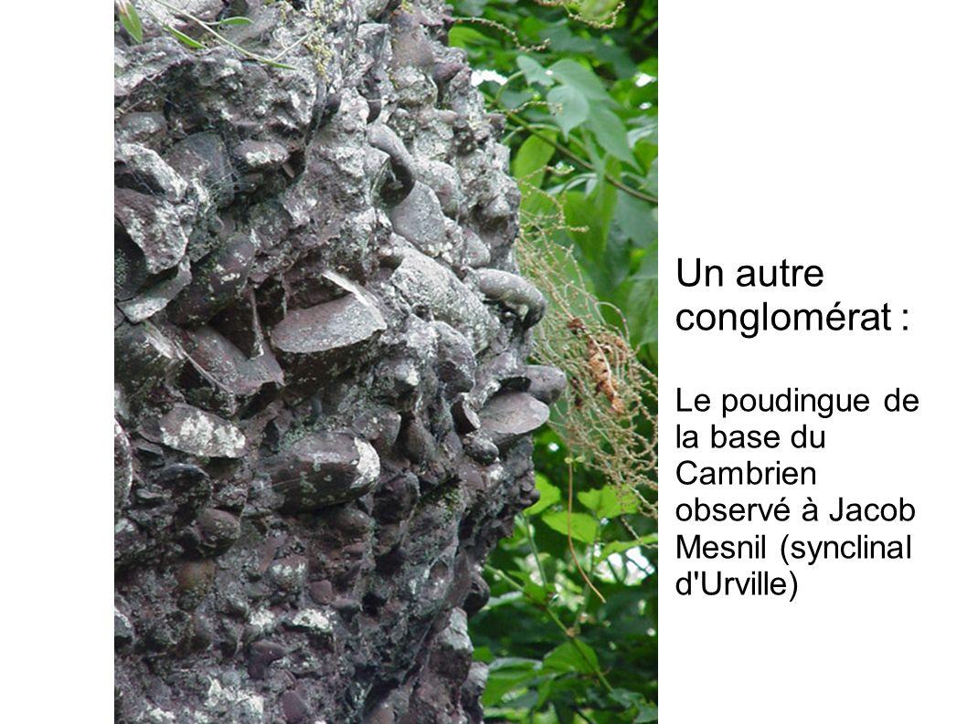 29/05/08Un autre conglomérat : Le poudingue de la base du Cambrien observé à Jacob Mesnil (synclinal d Urville)