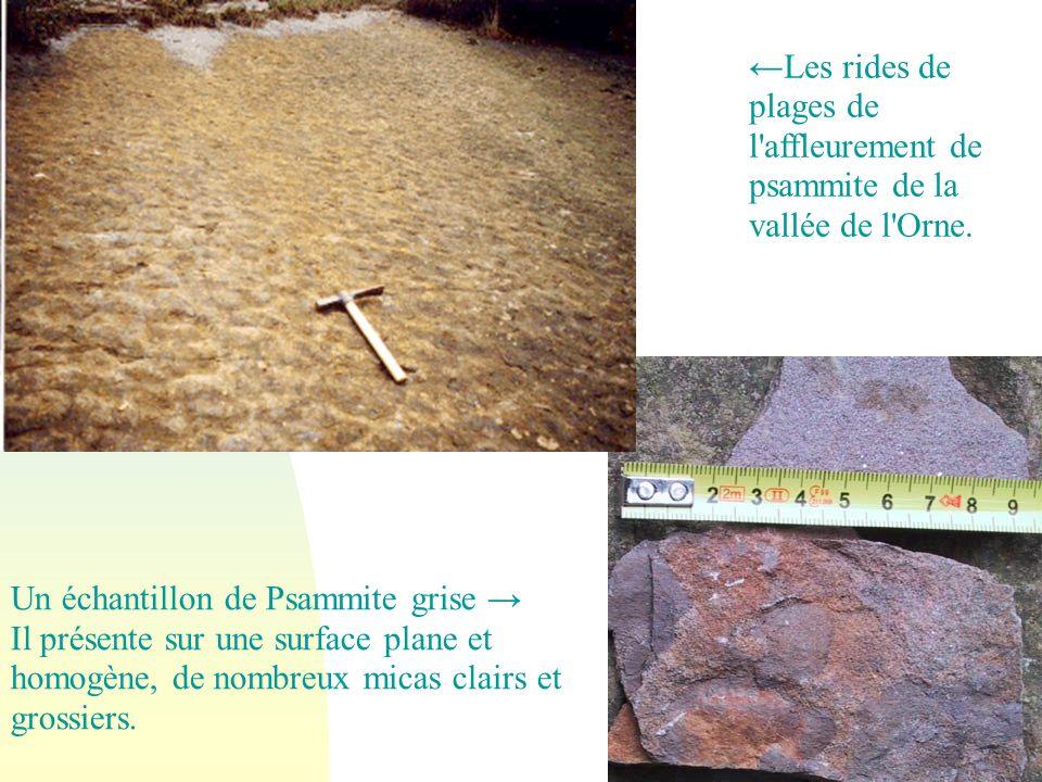 Un échantillon de Psammite grise →