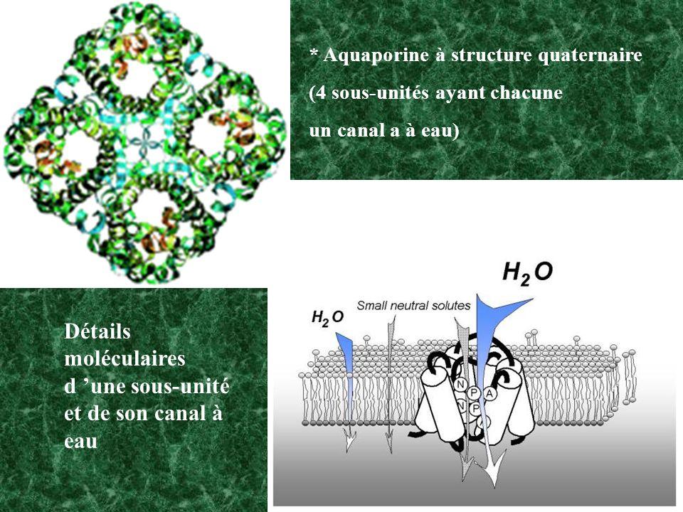 Détails moléculaires d 'une sous-unité et de son canal à eau