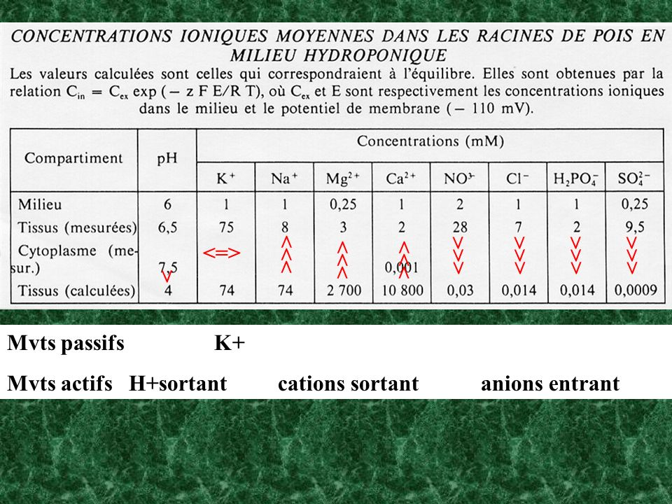 <=> >>> >>> >>> >>> >>> >>> >>> > Mvts passifs K+ Mvts actifs H+sortant cations sortant anions entrant.