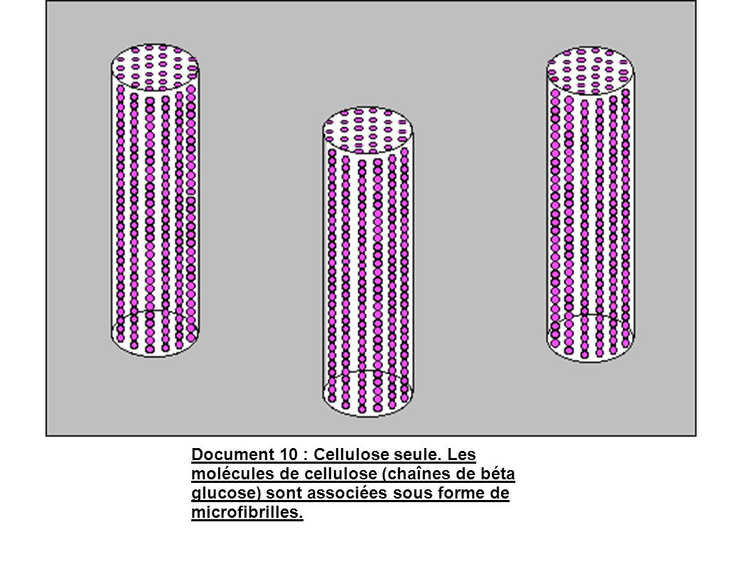 Document 10 : Cellulose seule