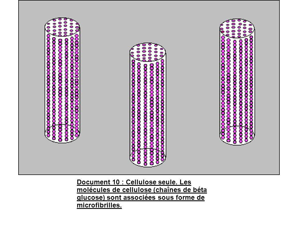 Document 10 : Cellulose seule