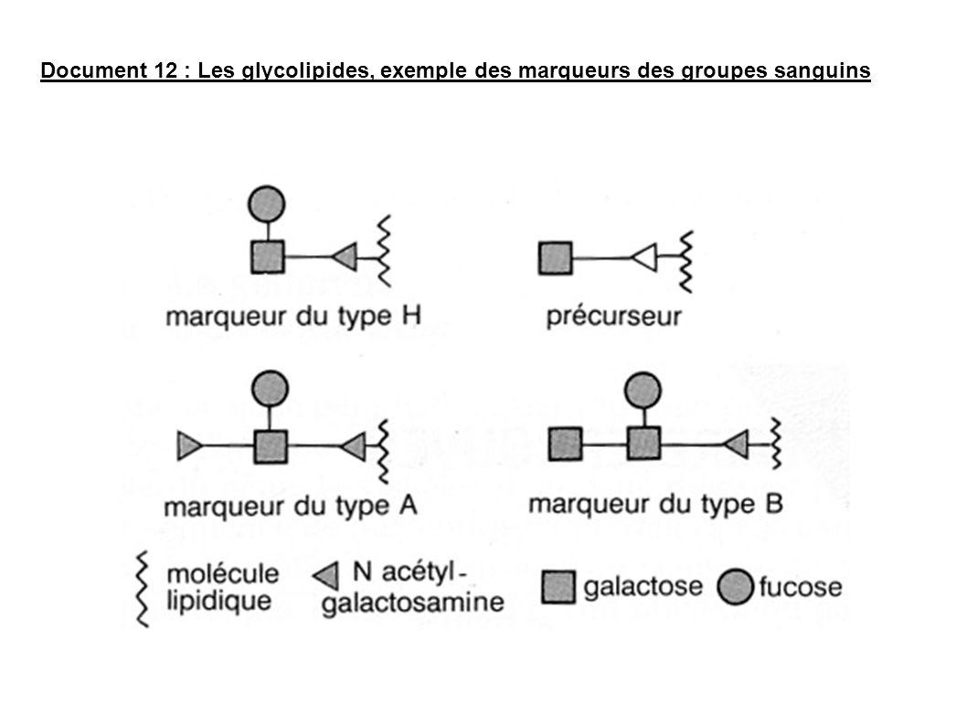 Document 12 : Les glycolipides, exemple des marqueurs des groupes sanguins