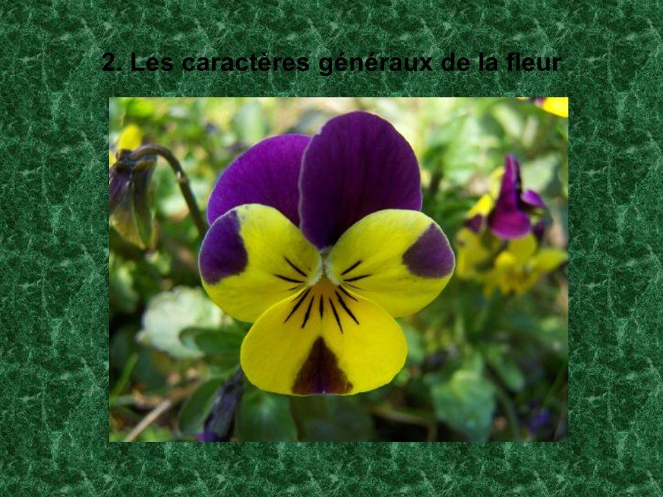 2. Les caractères généraux de la fleur