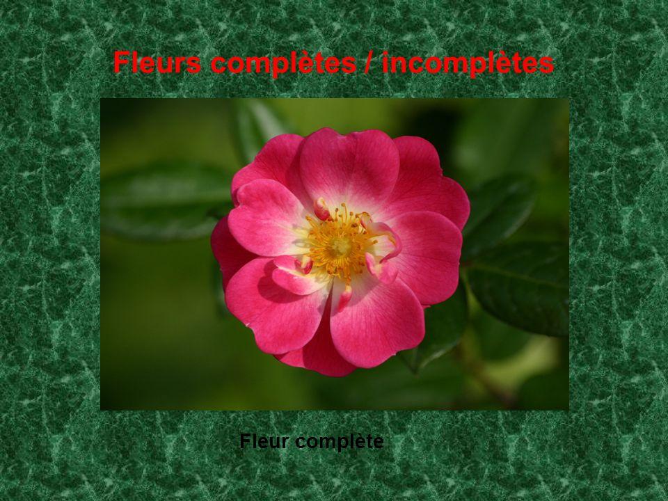 Fleurs complètes / incomplètes
