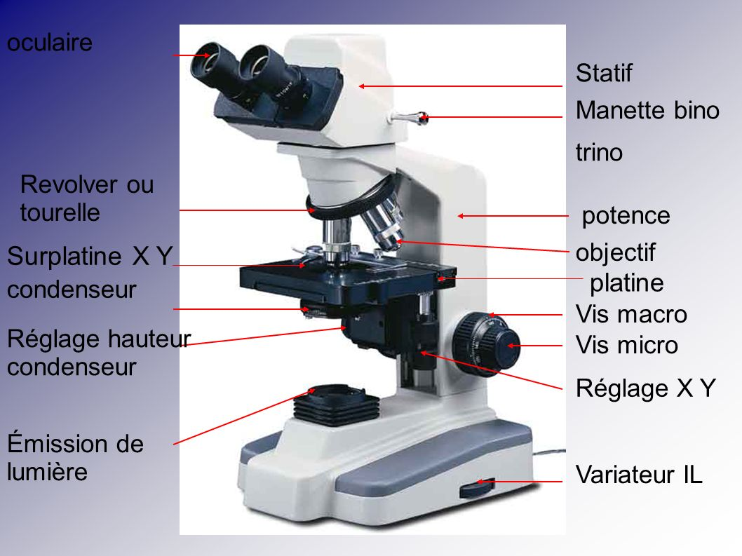 Surplatine X Y platine oculaire Statif Manette bino trino