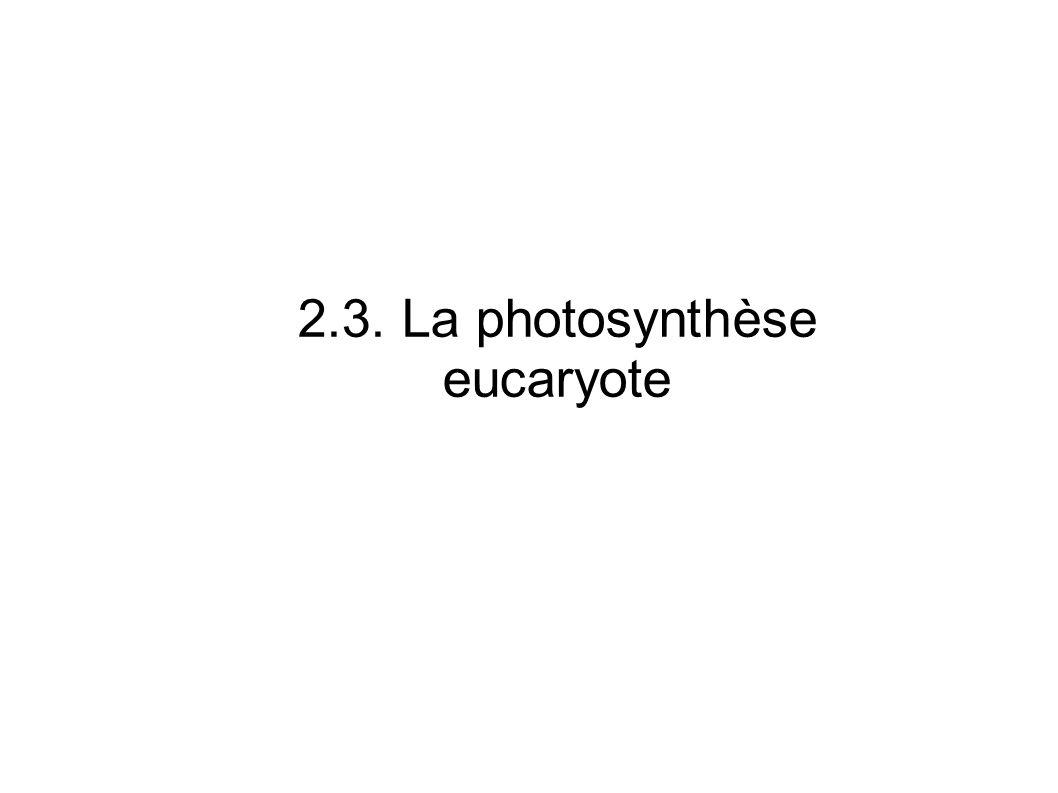2.3. La photosynthèse eucaryote