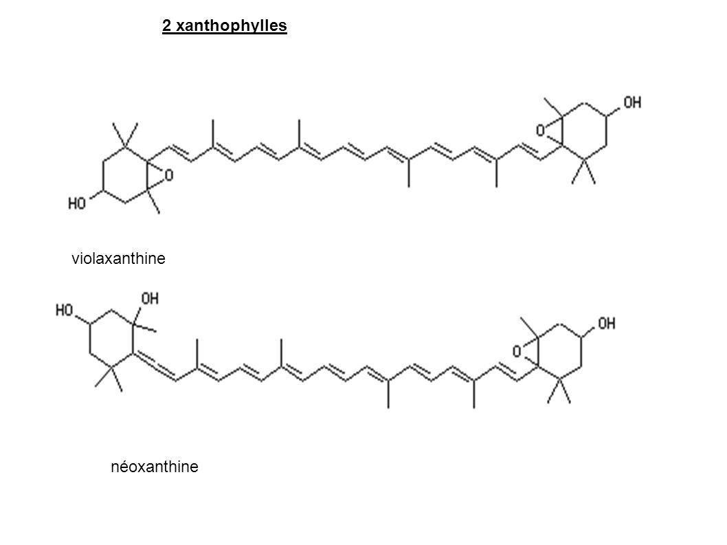 2 xanthophylles violaxanthine néoxanthine