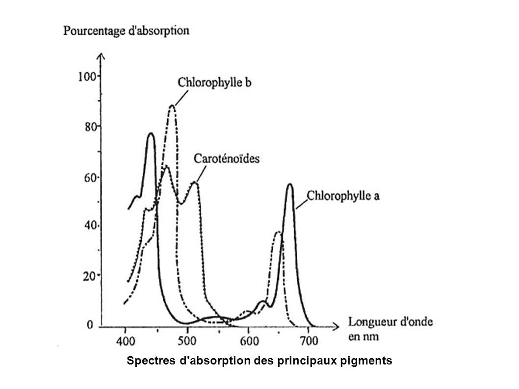 Spectres d absorption des principaux pigments
