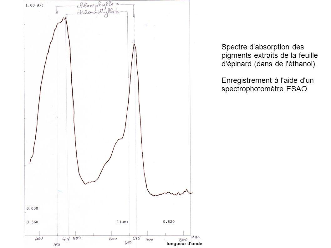 Spectre d absorption des pigments extraits de la feuille d épinard (dans de l éthanol).