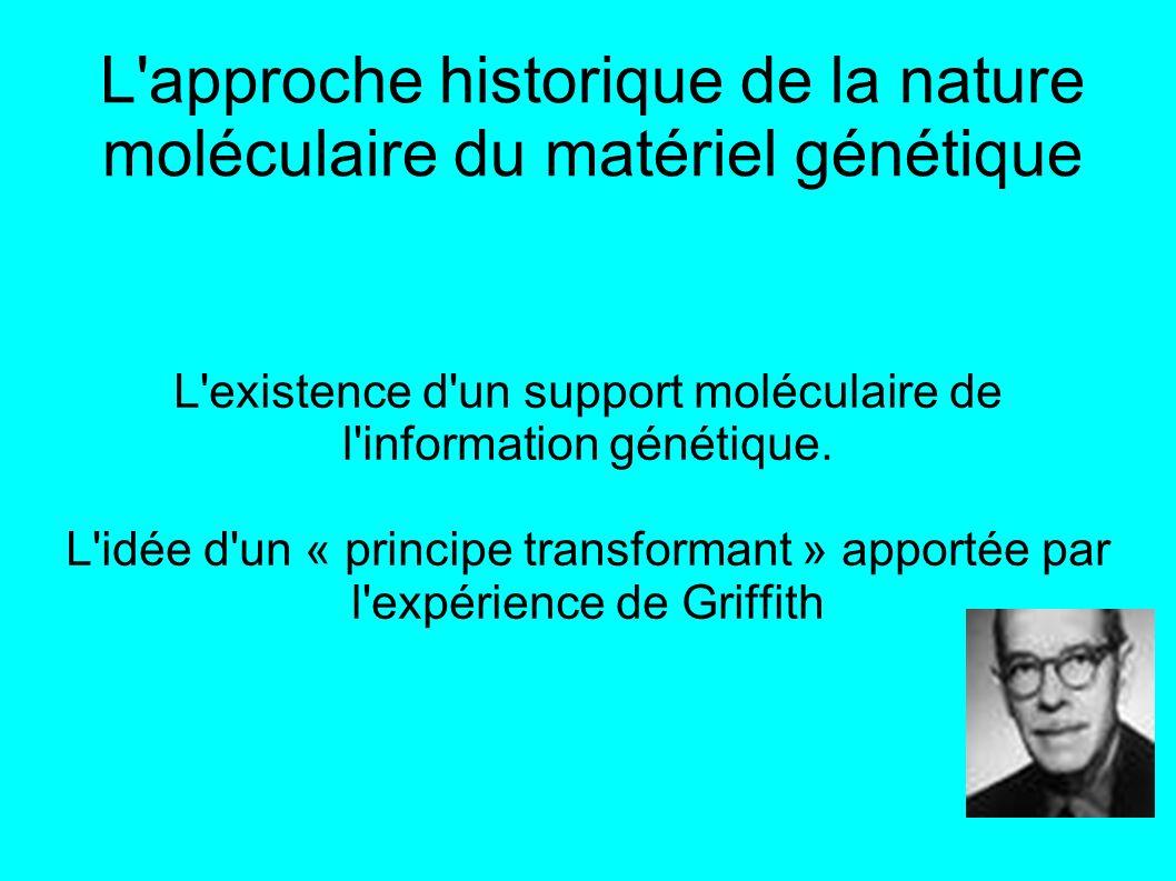 L approche historique de la nature moléculaire du matériel génétique