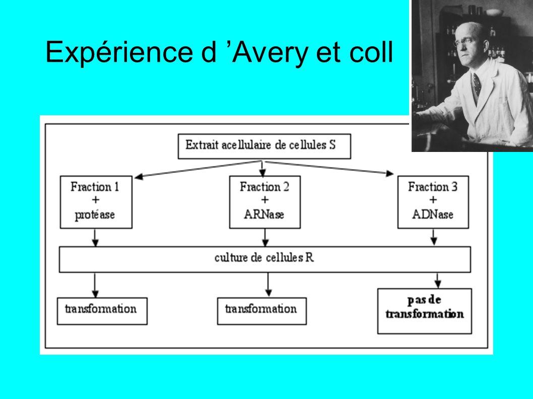 Expérience d 'Avery et coll