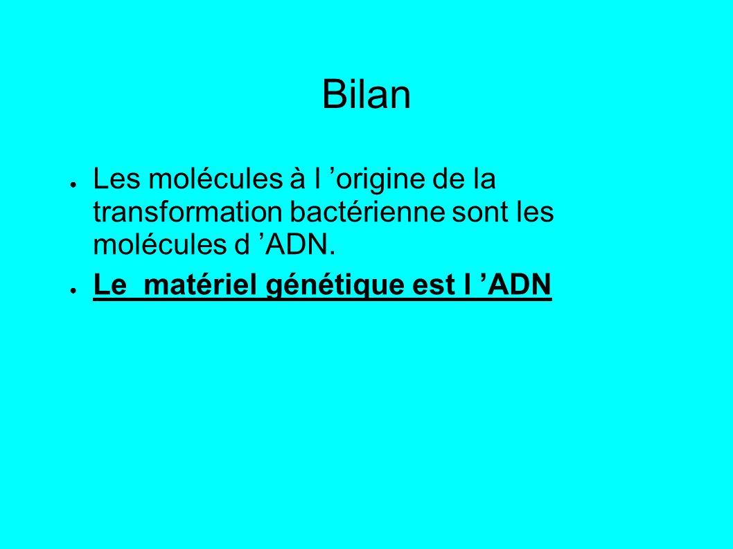 Bilan Les molécules à l 'origine de la transformation bactérienne sont les molécules d 'ADN.