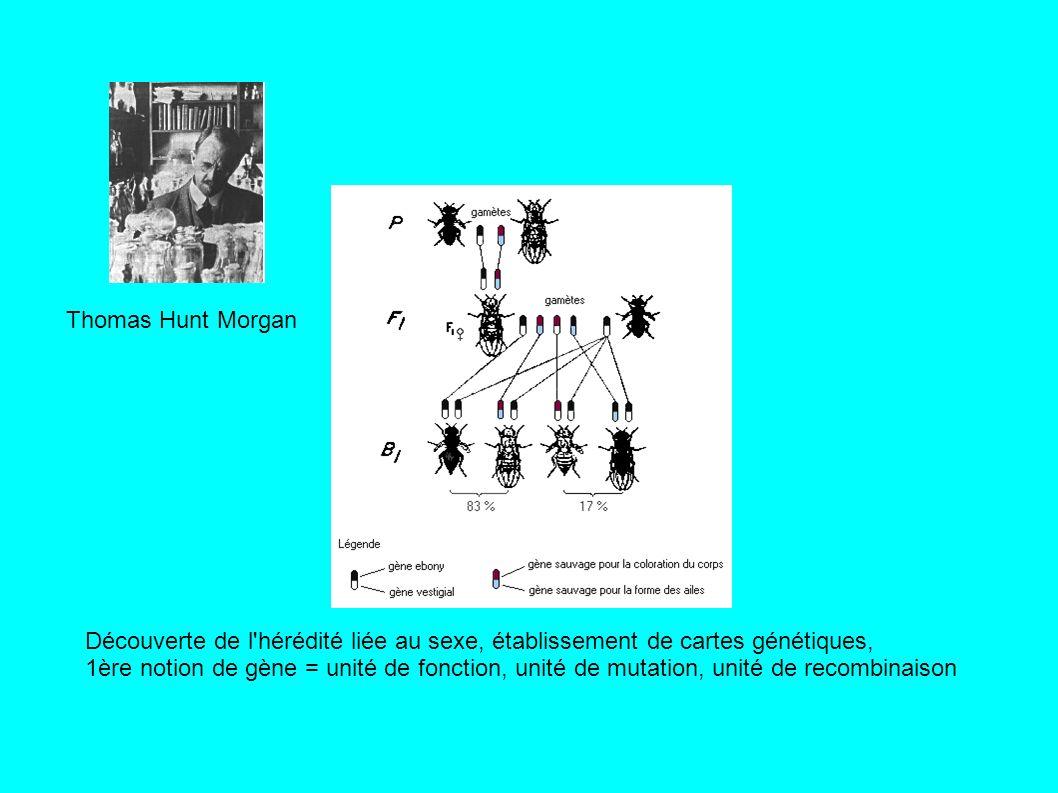 Thomas Hunt Morgan Découverte de l hérédité liée au sexe, établissement de cartes génétiques,