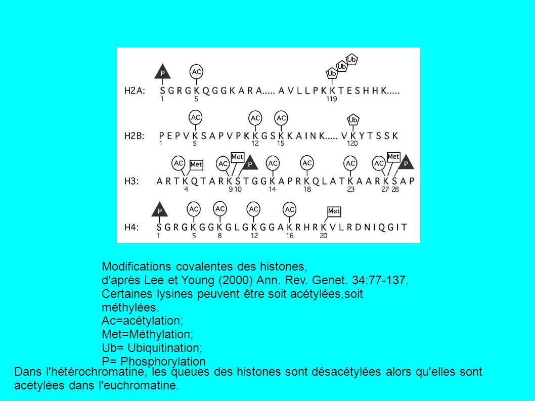 Modifications covalentes des histones,