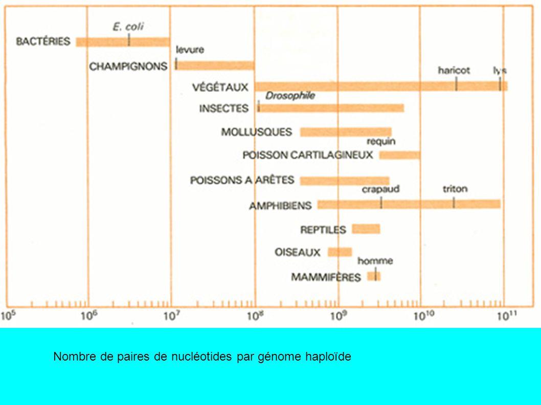 Nombre de paires de nucléotides par génome haploïde