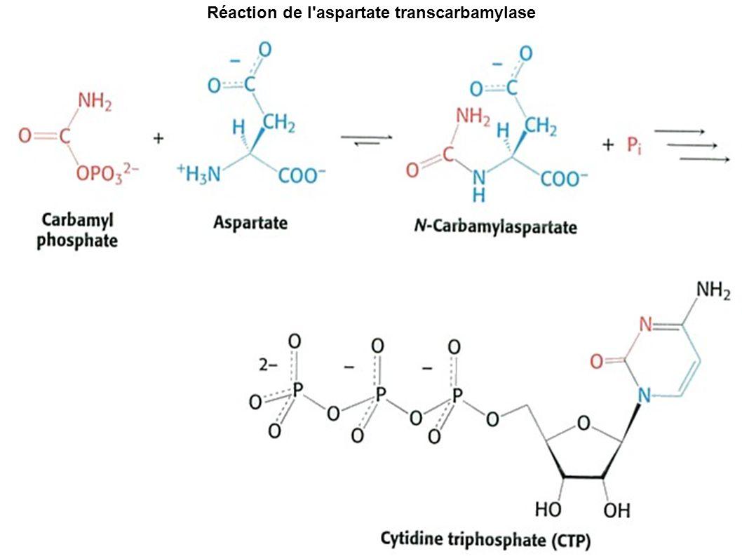 Réaction de l aspartate transcarbamylase