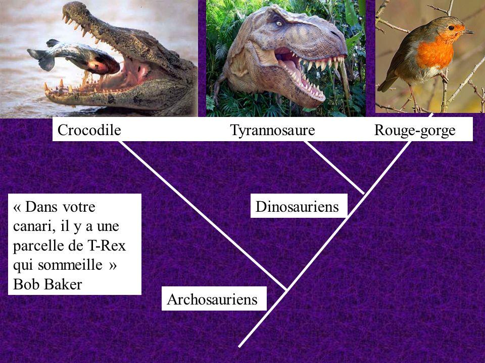 Crocodile Tyrannosaure Rouge-gorge