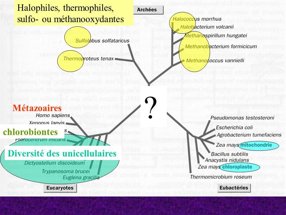 Halophiles, thermophiles, sulfo- ou méthanooxydantes Métazoaires