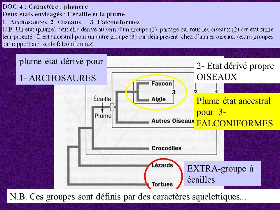 plume état dérivé pour 1- ARCHOSAURES. 2- Etat dérivé propre OISEAUX. Plume état ancestral pour 3- FALCONIFORMES.