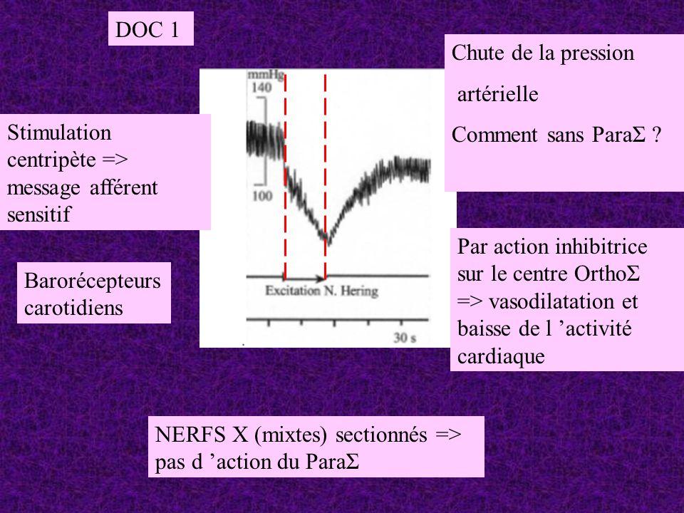 DOC 1 Chute de la pression. artérielle. Comment sans ParaΣ Stimulation centripète => message afférent sensitif.