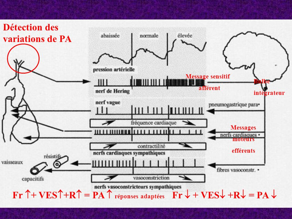 Fr + VES+R = PA  réponses adaptées Fr  + VES +R = PA 