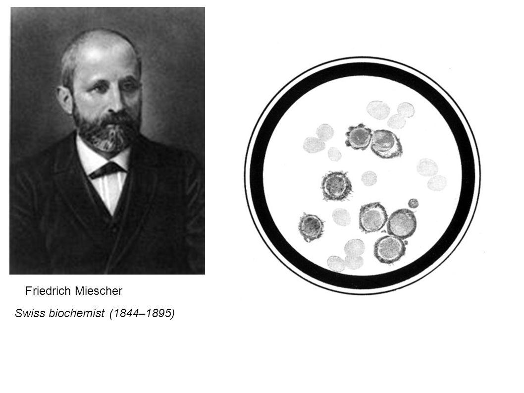 Friedrich Miescher Swiss biochemist (1844–1895)