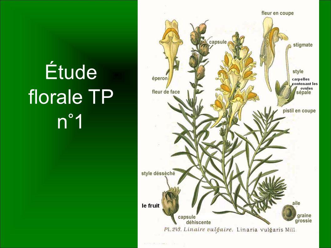 Étude florale TP n°1
