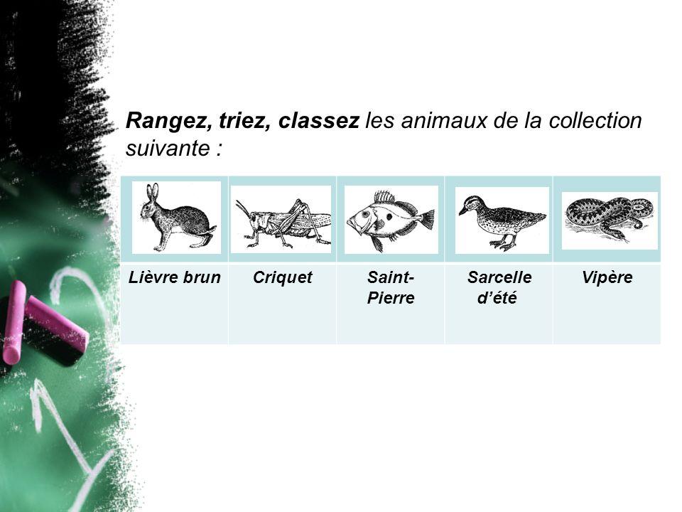 Rangez, triez, classez les animaux de la collection suivante :