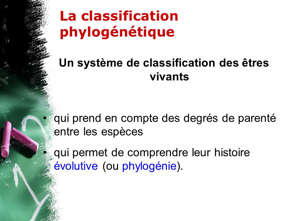 La classification phylogénétique