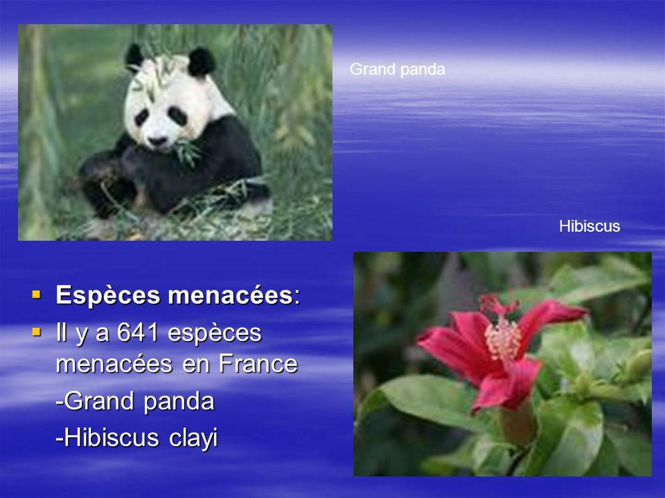 Il y a 641 espèces menacées en France -Grand panda -Hibiscus clayi