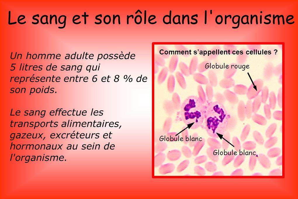 Le sang et son rôle dans l organisme